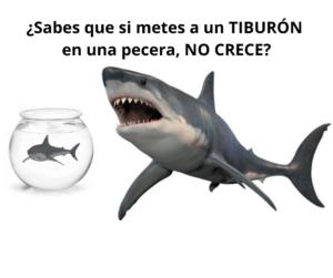 Comercial tiburon
